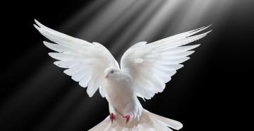 Våra kära bortgångna finns med oss – våra själar är inte platsbundna
