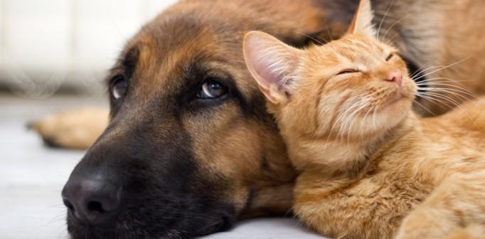 Djurkommunikation – Lär dig tala med djur