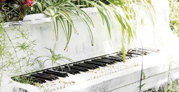 Påverkas växter av musik?