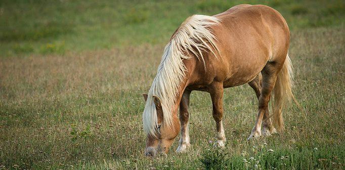 Hästens år